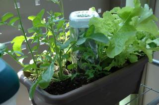 SIMERUS水やりテープ ペットボトルタンク 基本的使用法