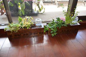 楽々底面給水シートの水面を設定しないタイプ 栽培例(窓際)