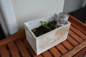 楽々底面給水シートの水面を設定しないタイプ 栽培例(ベランダ)③