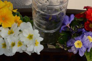 底面潅水冬花