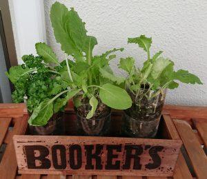 PETボトル植木鉢葉物野菜