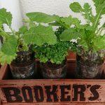 SIMERUS水やりテープペットボトル植木鉢 栽培例
