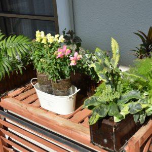 PETベランダ花や観葉
