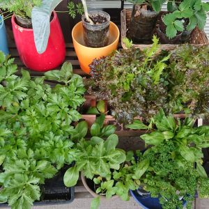 PET野菜栽培