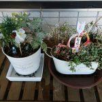 SIMERUS底面給水 観葉栽培例