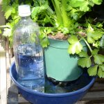 楽々底面給水シート 底面給水鉢 セロリ栽培 PETボトル水タンク