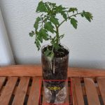 SIMERUS PETボトル植木鉢トマト
