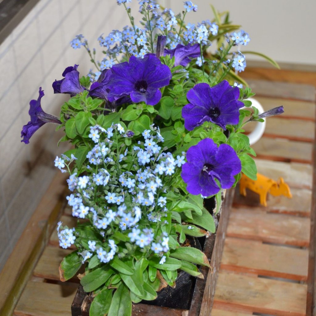 楽々底面給水シート 花卉類