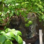 SIMERUS-PET植木鉢
