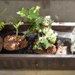 楽々底面給水シート 栽培例