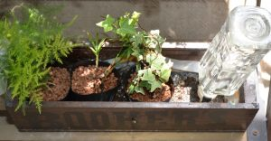 栽培例 楽々底面給水シートの水面を設定しないタイプ