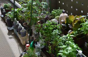 色々な栽培