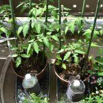 底面給水植木鉢
