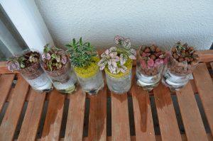 ハイドロカルチャー&カラーサンドによる栽培例