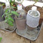 SIMERUS底面給水 トマト栽培例