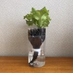 SIMERUS水やりテープ PETボトル植木鉢 レタス栽培