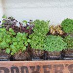 PETボトル植木鉢栽培 スプラウト