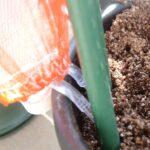 大きなペットボトルによるSIMERUS水やりテープ(タレ瓶活用型)による給水器埋設方法