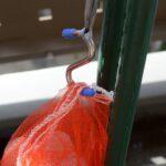 大きなペットボトルによるSIMERUS水やり 細部