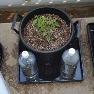PET給水タンク式水面設定 トマト植栽
