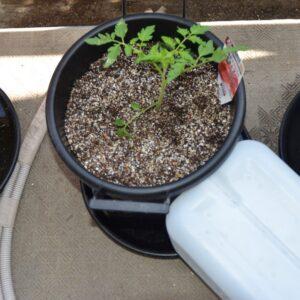 トマト 2021/4/10 定植直後 底面給水区