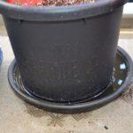 栽培試験 トマト 2021/4/2 定植直後 PET試験区 2本設置