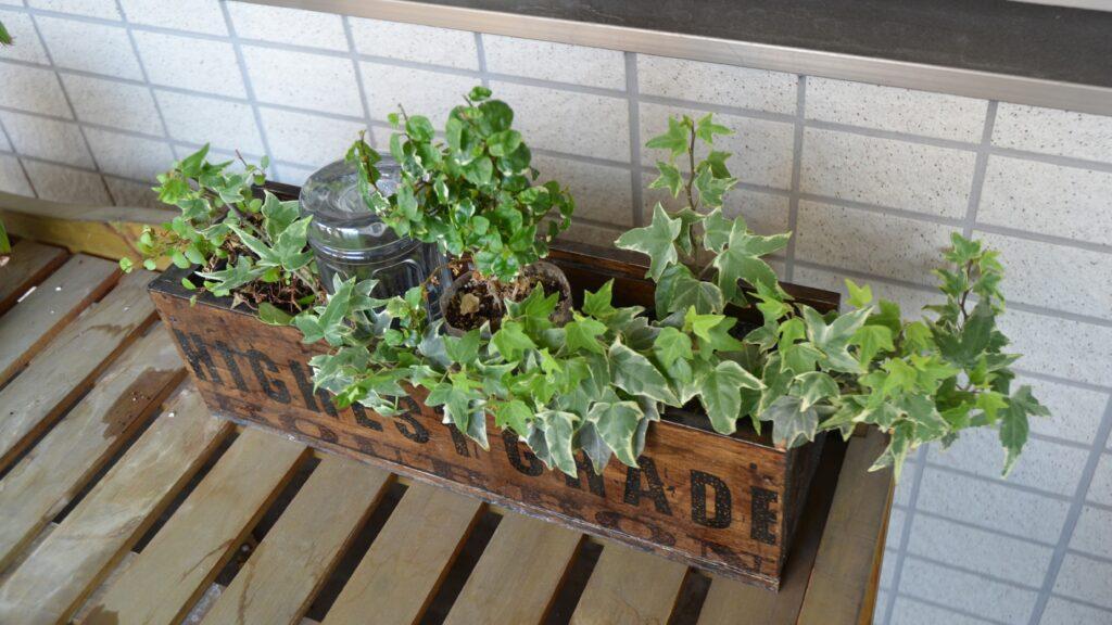 栽培事例 2021/5/23 トマト 楽々底面給水シート 水面を設定しない方式 完成済み