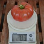 283グラム トマト