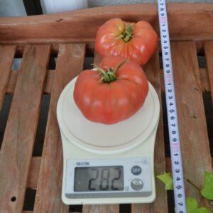 トマト完熟質量