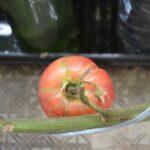 トマト裂果